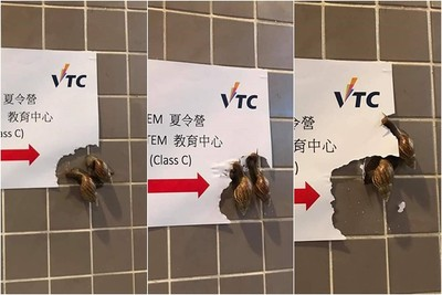 廁所3進3出…驚見蝸牛進食地圖!