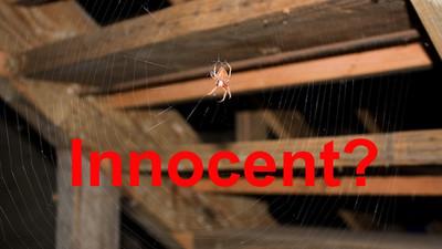 科學解謎:蜘蛛其實不會咬人…