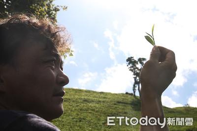 蟲吻茶好風味!蕭文龍領軍花蓮最年輕產銷班 「與蟲隻共享」翻身金牌茶農