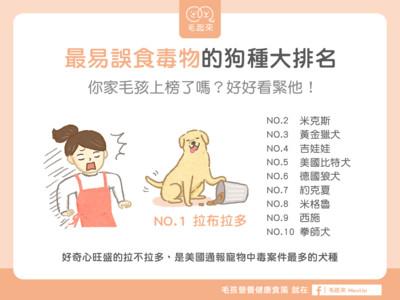 愛亂啃!「最容易中毒」狗狗TOP10...你家那隻貪吃鬼上榜了?