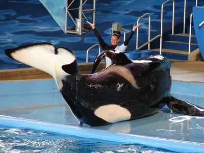 寧不賺5萬張門票!旅行社拒賣動物表演節目 不讓虎鯨悲劇重演