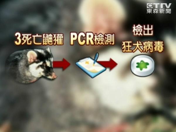 台灣3鼬獾染狂犬病 疑走私動物野放惹禍