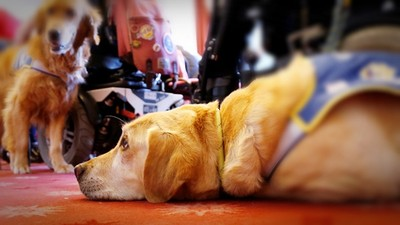 導盲犬幫撿球「遭痛毆10拳」!視障主人無悔意,比不雅手勢嗆路人
