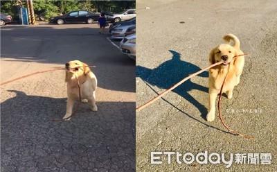 拿回去做藤條?狗抬頭叼長竹竿