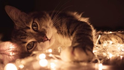 為什麼趁我睡覺時死掉?貓主人愧疚上網求助 網友解答後淚崩