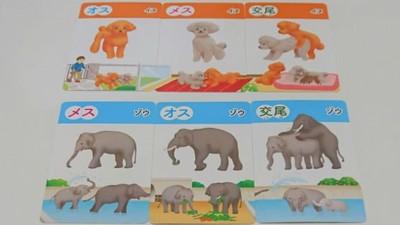 抽牌吧受精boy!日本用動物卡牌教性教育 網笑:根本遊戲王