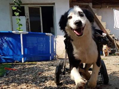 專救殘缺毛孩!善心夫妻做輪椅幫復健...近百隻狗狗都笑得溫暖
