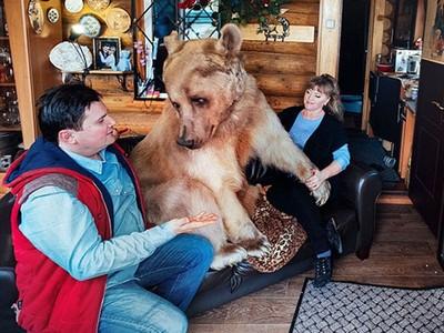 不會咬人!戰鬥夫妻收編流浪熊 23年長超巨大hen會塞奈