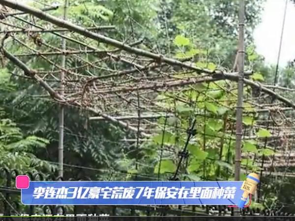 ▲李連杰豪宅的花園,變成保安的菜園。(圖/翻攝自《愛奇藝》)