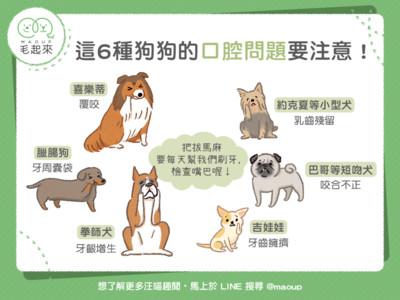 「口腔狀況最堪憂」6種狗狗 吉娃娃的小嘴竟要擠42顆牙