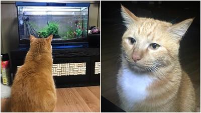 家中買了新魚缸 鏟屎官隔天上網求救:「我家喵皇好像熬夜了」