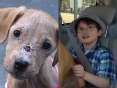自閉童堅持救回「皮包骨流浪狗」!兩個月後…他們的模樣截然不同