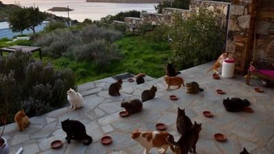 徵鏟屎官啦!愛琴海55隻貓皇等你服侍 連「奴才房」都是海景別墅