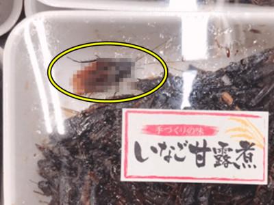 超市「蝗蟲甘露煮」送大強!日人噁到崩潰..可牠們都是蟲啊