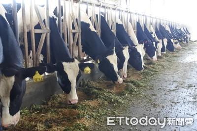 擠奶可以兼按摩? 科技養牛超友善