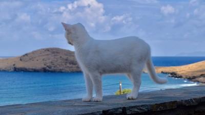 希臘小島貓咪收容所徵人中!工時4hr可享海景民宿+55隻喵皇陪伴