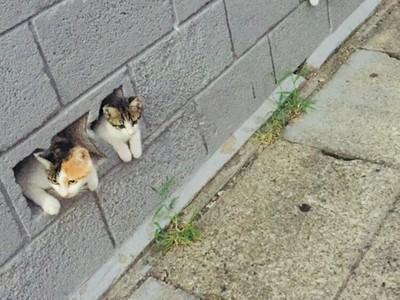 貓也懂抄襲!3隻喵星人「集體卡牆」萌探頭:安啦朕視察一下