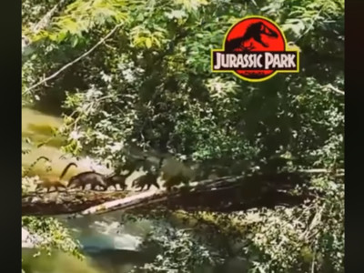 早說侏儸紀公園是真的!目擊「成群腕龍」排隊過河...我又看了啥