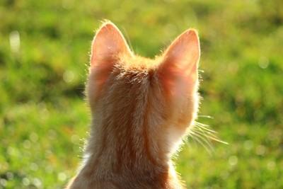 為啥「捏住後脖子」貓咪會變乖? 喵喵生命就掌握在你手中