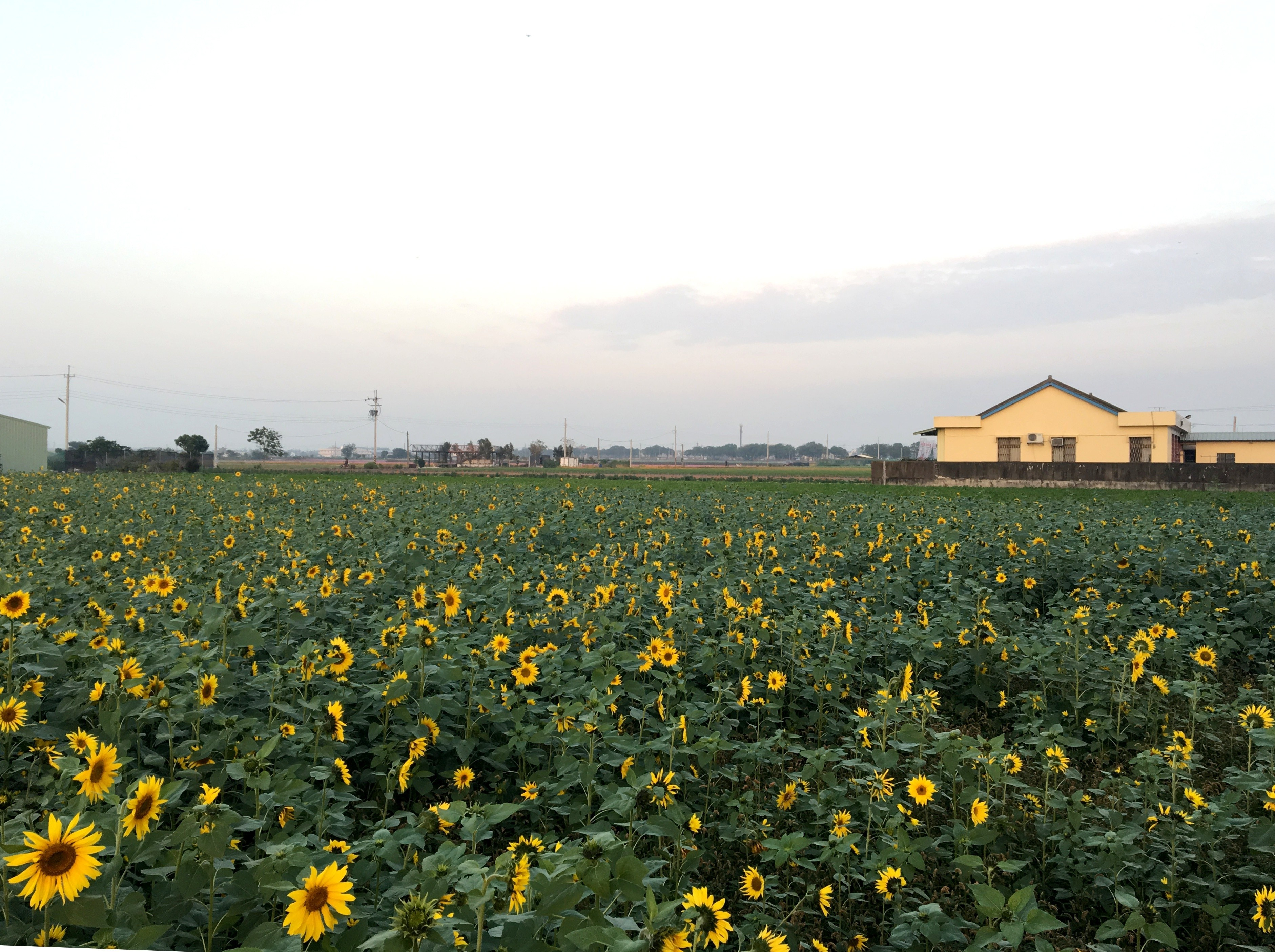 農業政策,雲林,綠能,農業,花卉,碳中和,溫室氣體,碳匯,補貼