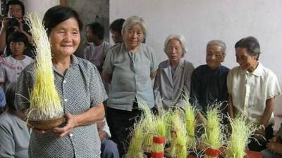 古代七夕傻眼比賽! 妹子宅在家「孵綠豆芽」 長得高的才是正妹