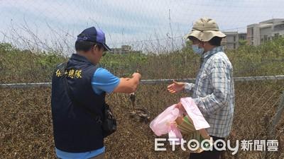 環頸雉卡鳥網成乾屍 農:西瓜被啄洞