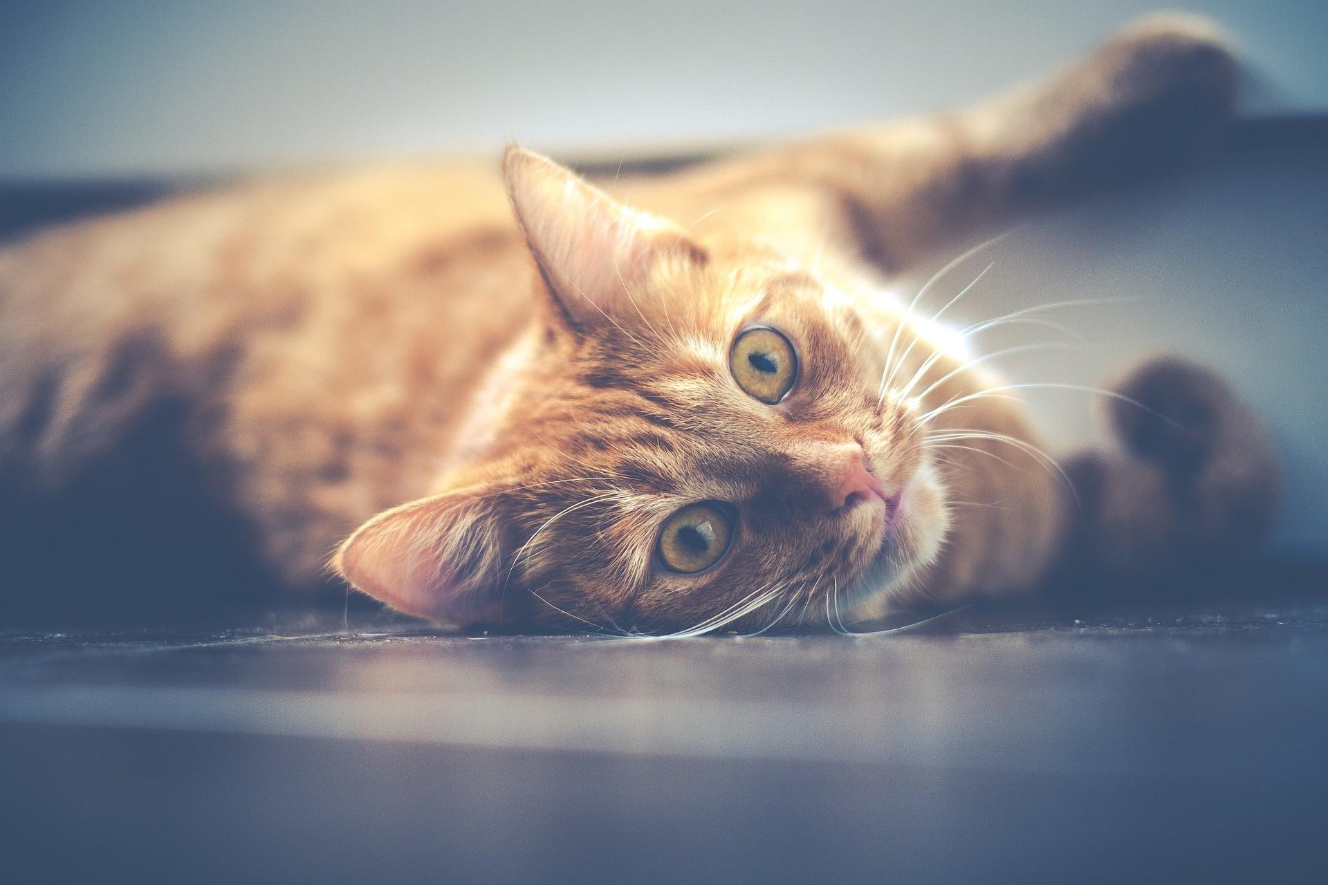 ▲▼大田野貓遭毒殺(示意圖/Pixabay)