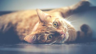 8年來毒死千隻貓 70歲兇嫌遭逮無法可罰 理由「只是討厭貓而已」