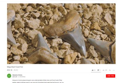 澳男海邊發現2500萬年前鯊魚牙齒!