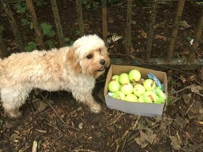恨沒陪牠久一點!路邊一籃免費網球..「請拿去和還在世的狗狗玩」