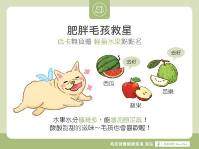 家中胖毛孩能吃啥?「3水果」熱量超低 輕盈瘦OK啦~