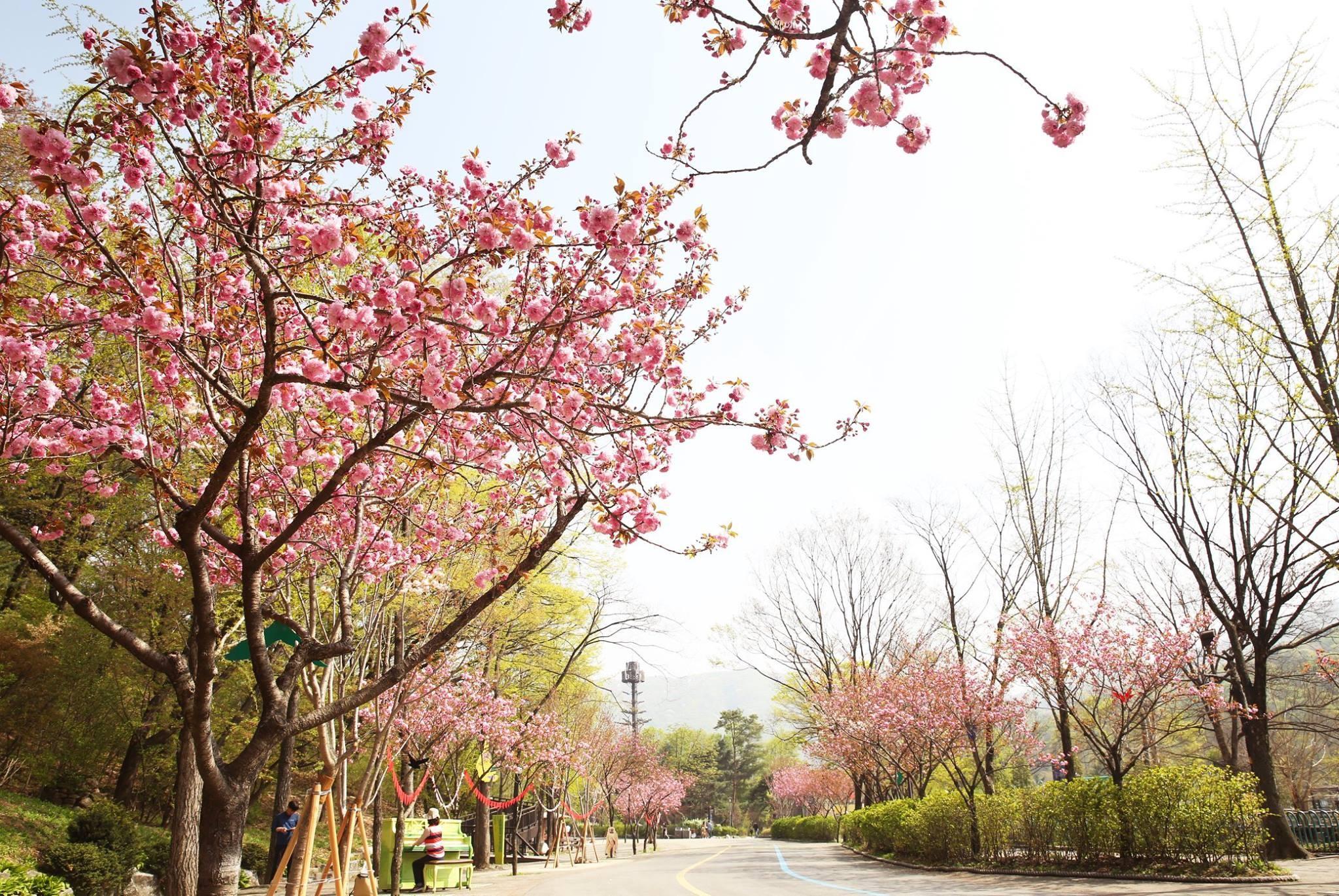 ▲▼首爾大公園內發現屍袋。(圖/翻攝自首爾大公園官方臉書)