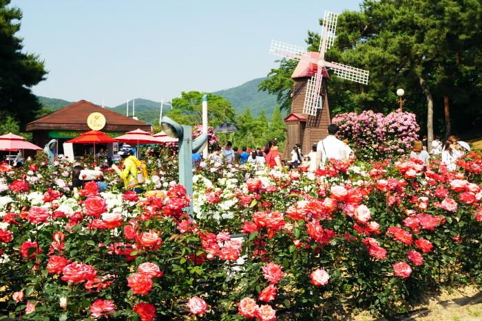 ▲▼首爾大公園玫瑰園(圖/翻攝自韓國觀光公社官網)