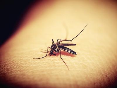 又被蚊子咬!科學解釋「為啥只叮你」,以為體溫高愛吃肉...都錯