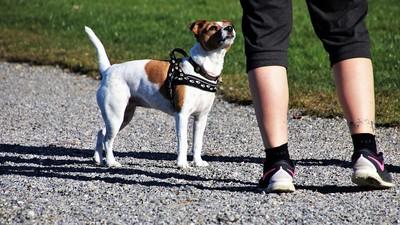 遛狗嚇到單車客摔傷 寵物險理賠最高百萬