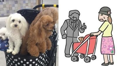 「老狗坐手推車」被路人笑沒用! 漫畫家畫出飼主愛狗苦衷