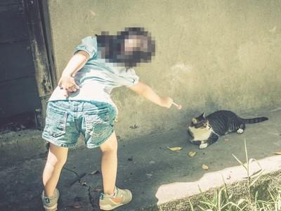 放養貓渾身傷回家!家人堅持不給就醫:牠是幫阿嬤擋煞