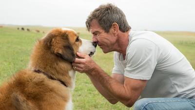 不想看電影中的狗狗死掉! 劇透「毛孩生死」網站:讓觀眾有心理準備
