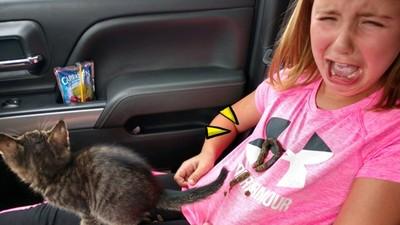 護送小奶貓「拉出整條巨屎」!慘被直線貫穿整件T,女兒哭到咆哮