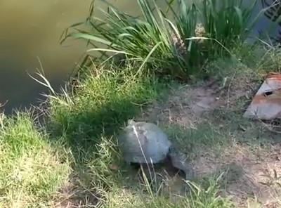 烏龜:水池,你令我飛躍起來了!
