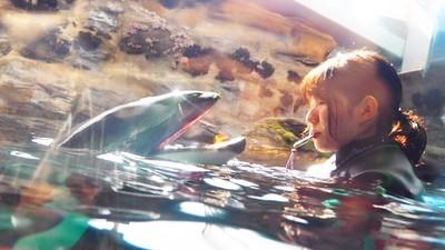 發情公海豚把女泳客「頂飛海平面」 官方下令:請離牠50公尺遠