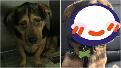 「最悲傷狗狗」見人就吠 被暖情侶開6小時車帶回…終於露出笑容
