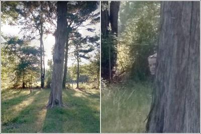 Google街景墓園驚見樹旁躲灰臉女孩