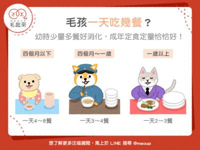 毛孩「一天最好吃幾餐」?專家按年齡公佈...幼貓要吃8餐!