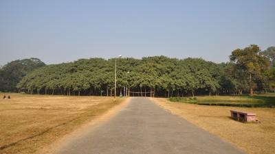 250年老榕樹自成森林!氣根落地變新枝幹 面積超過足球場
