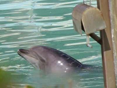 逃過屠殺又被遺棄!「最孤獨海豚」在荒廢水族館獨活8個月等死