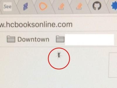 螢幕「封印」活螞蟻 強迫症果粉崩潰:牠爬了五個月還不死