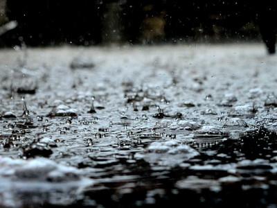 雨味不是來自雨!「放線菌」遇水醒過來 狂噴土臭素釋放氣息