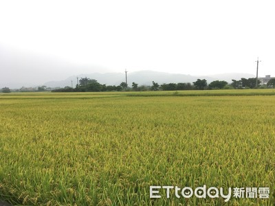 穀價低迷今年虧20億 農糧署反駁