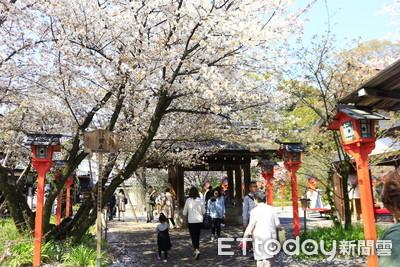 酷暑+強颱 日本櫻花竟10月開花